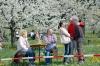 2014-04-13-kirschbluetenfest-013