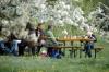2014-04-13-kirschbluetenfest-015