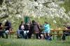 2014-04-13-kirschbluetenfest-016
