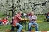 2014-04-13-kirschbluetenfest-022