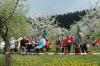 2014-04-13-kirschbluetenfest-023