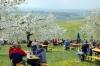 2014-04-13-kirschbluetenfest-25