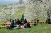 2014-04-13-kirschbluetenfest-26
