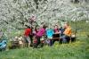 2014-04-13-kirschbluetenfest-29