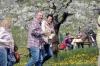 2014-04-13-kirschbluetenfest-32