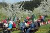 2014-04-13-kirschbluetenfest-36