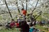 2014-04-13-kirschbluetenfest-44