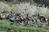 2014-04-13-kirschbluetenfest-63