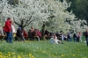 2014-04-13-kirschbluetenfest-64