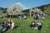 2014-04-13-kirschbluetenfest-70
