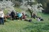 2014-04-13-kirschbluetenfest-73