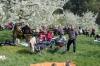 2014-04-13-kirschbluetenfest-75
