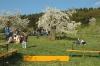 2014-04-13-kirschbluetenfest-86