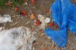 Illegale Müllentsorgungen