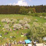 Kirschblütenfest 2018